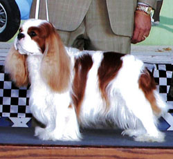 Jack Onofrio Dog Shows Show Results
